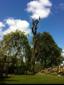 Tree surgery & clearance